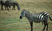 Guía de viaje Ruaha National Park