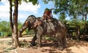 Sumate Elephant Safari