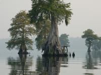 The Great Dismal Swamp National Wildlife Refuge