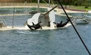 Marineland 
