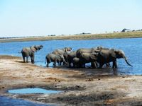 Safari Parque Nacional Chobe