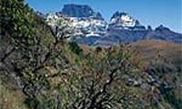 Cathkin Peak State Forest 