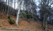 Kinnoull Hill Woodland Park