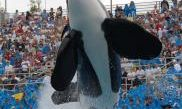 SeaWorld San Diego 