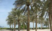 Al Bidda Park 