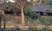 Hotel Sabi Sabi Bush Lodge