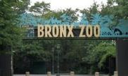 Bronx Zoo 