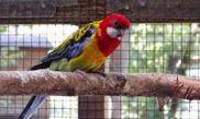Vogelpark Olching
