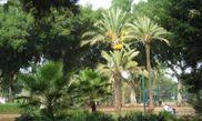 Meir Park
