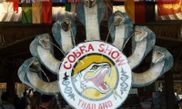 Cobra Show Thailand 