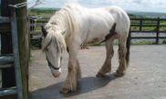 Mountain View - Horse Riding Centre