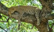 Kruger National Park 