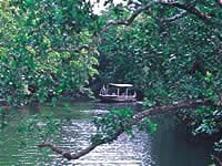 Chris Dahlbergs Daintree River Tours