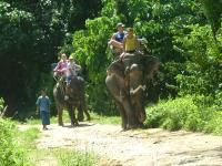 Safari Elephant Club