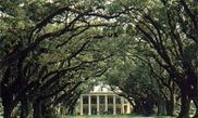 Oak Alley Plantation Restaurant & Inn