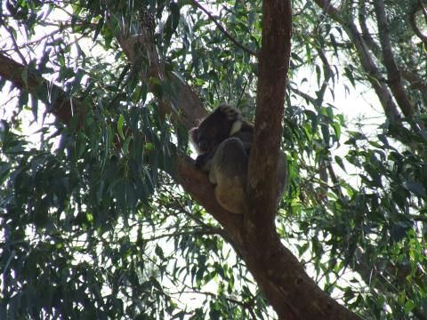 Warrawong Wildlife Sanctuary (Highlight)